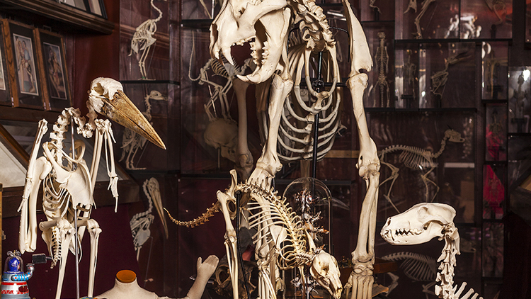 VIKTOR WYND'S MUSEUM OF CURIOSITIES 3