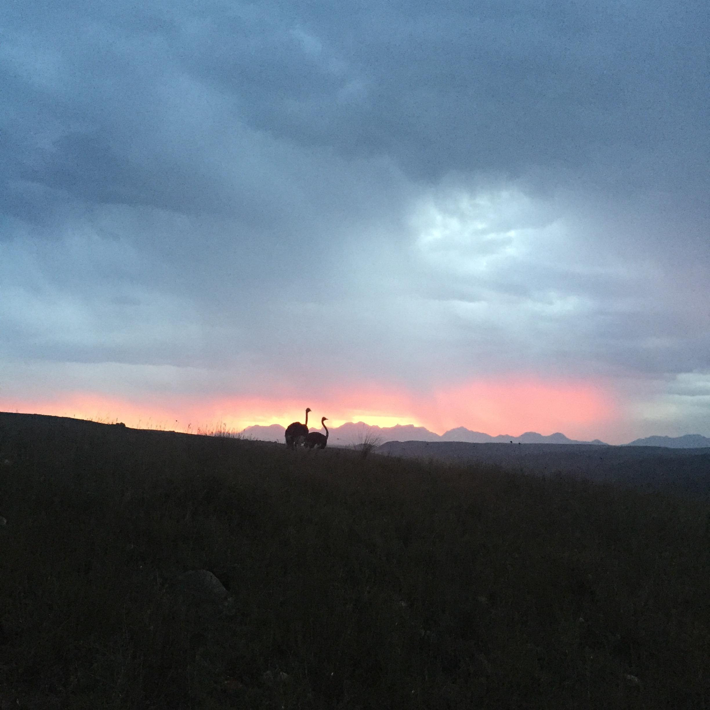 Gondwana sunset
