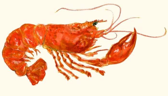 lobsterbarhackney