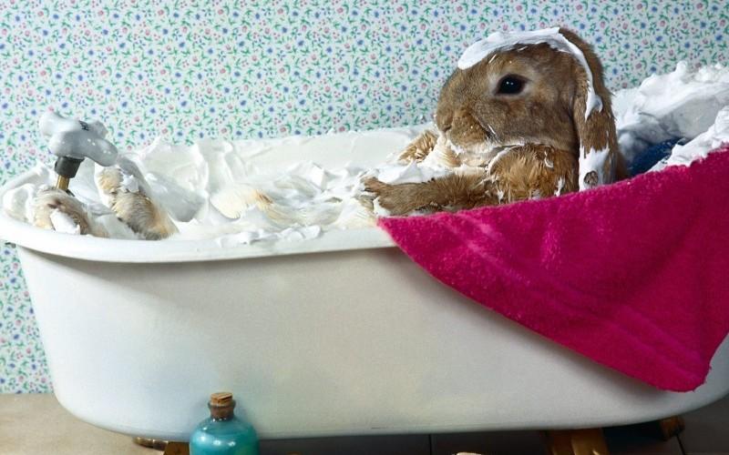 Bunny-Bubble-Bath