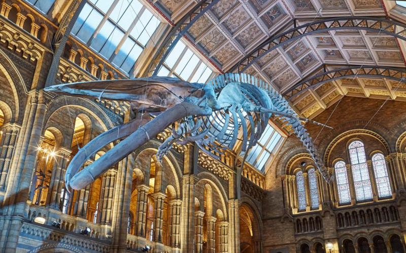 Natural History Museum | London On The Inside