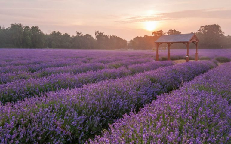 mayfield lavender farm | london on the inside