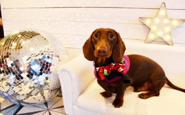 A DACHSHUND DISCO IS COMING TO LONDON
