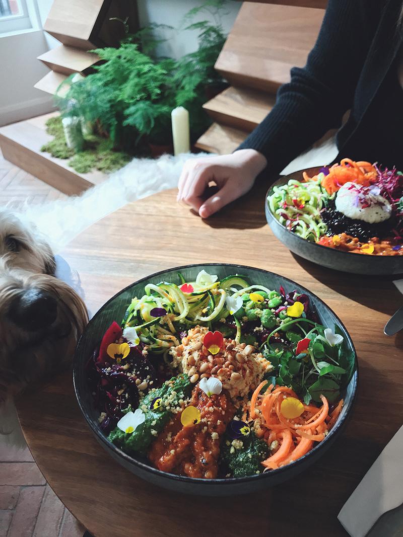 Bowl and dog
