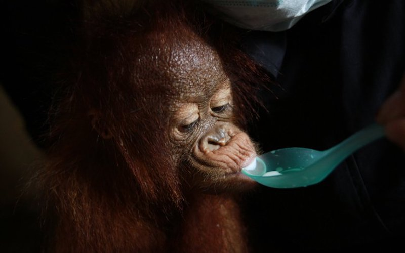 palm oil boycott