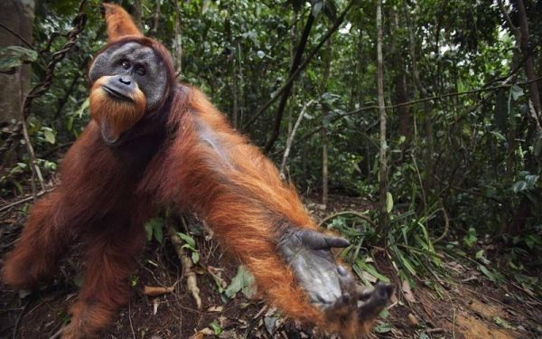 why palm oil matters for londoners
