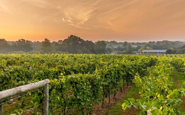 THE BEST VINEYARDS TO VISIT NEAR LONDON