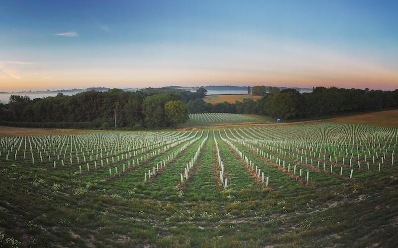 Tillingham Wines Sussex