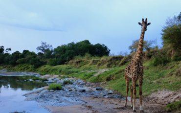 Masai Mara Intrepids